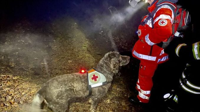 Rettungshunde: Gladbecker Rettungshundeeinsatz in Warstein Großeinsatz für DRK Rettungshundestaffeln