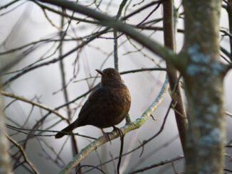 Die Stunde der Gartenvögel ist wieder da