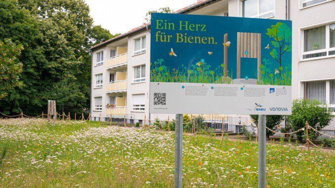 Wildbienen werden von Vonovia in Gladbeck unterstützt